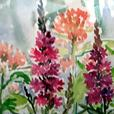 Art - Wild Flowers #1 - Original Watercolour