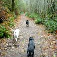 Nature Calls Dog Adventure Hikes