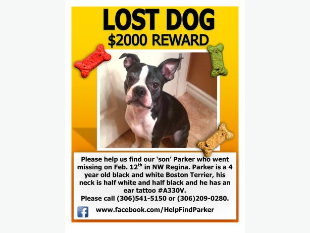 Lost Dog- Please help us find Parker