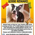 Lost Dog- Please help us find Parker!