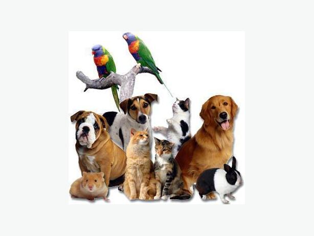 Pawsitive Pet Care (Pet Sitters, Dog Walkers and More)