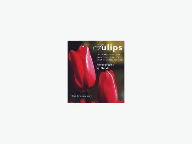 Tulips by Photographs by Malak, text by Sonia Day