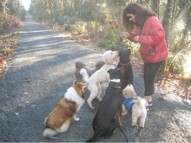 WAGS AWAY Dog Walking and Hiking & Pet Visits