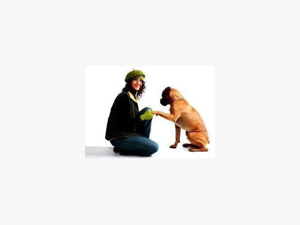 Petsmart Saskatoon Dog Training