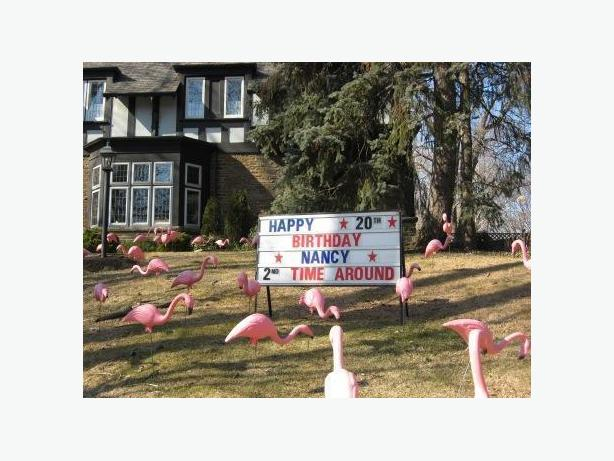 lawn flamingos penguins decorating in Toronto. birthday, anniversary