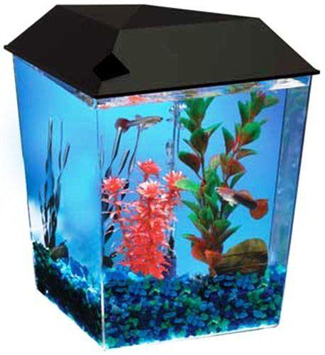 new aquarium system 1 gallon starter fish tank set light hood air pump filter central ottawa. Black Bedroom Furniture Sets. Home Design Ideas