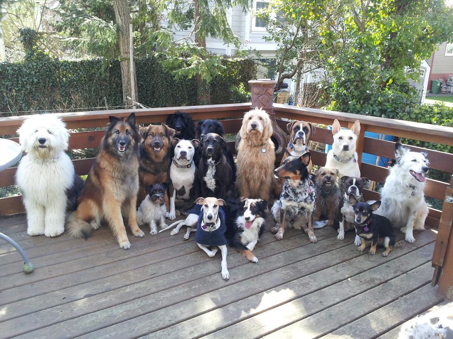Dog Training Montreal West Island