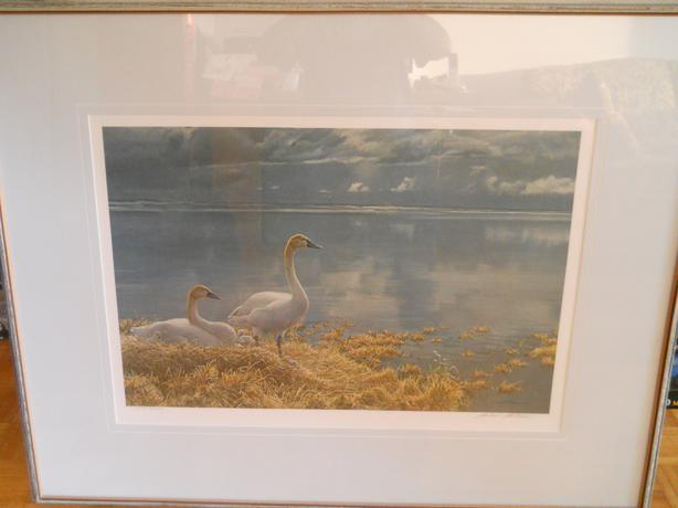 Robert Bateman Wide Horizon Tundra Swans S/N Framed