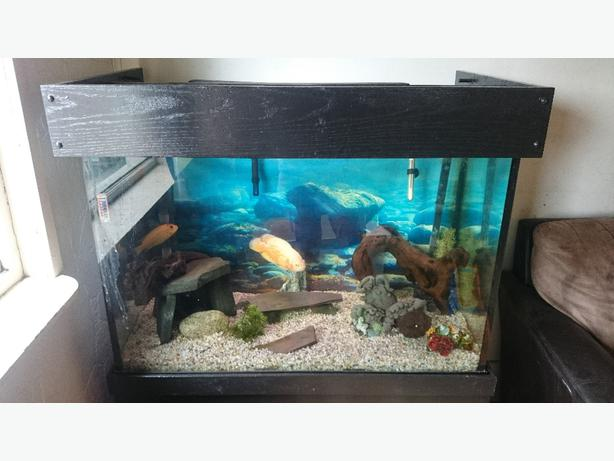 Fish tank decorations 70 gallon top fin 75 gallon hooded for Petsmart fish filters