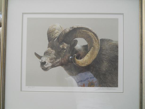Robert Bateman Stone Sheep Ram S/N Framed