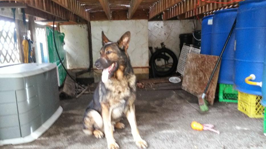 Best Dog Training Kitchener
