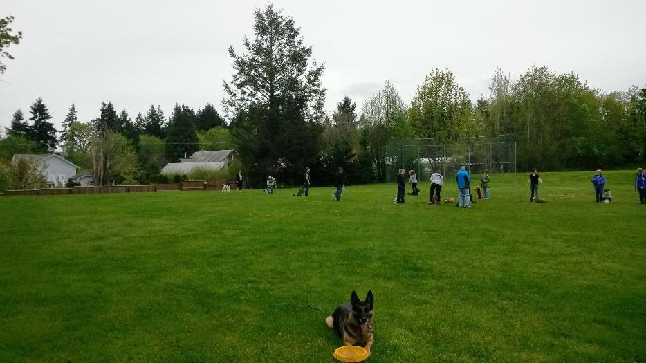 Moose Jaw Dog Training