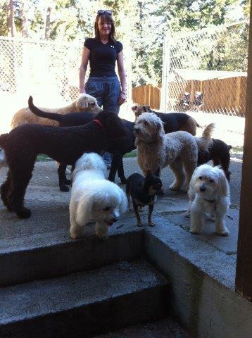 Dog Home Boarding Northumberland