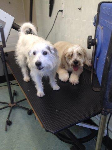 Dog Grooming Montreal North