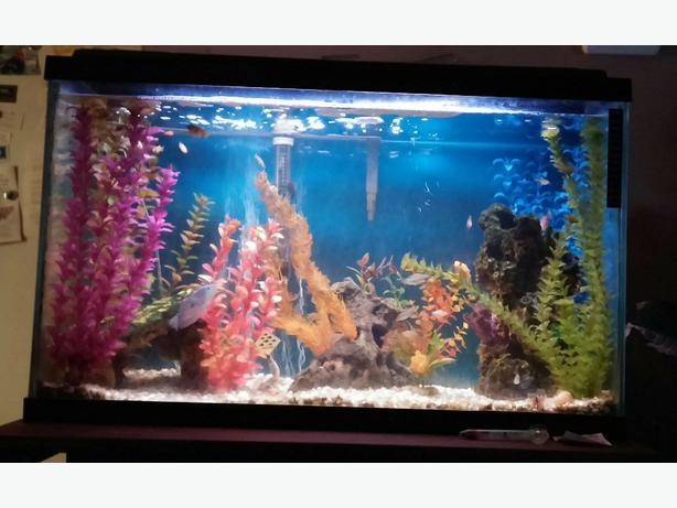 Steal of a deal 30 gallon fish tank everything included for Fish tank deals