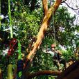 Advantage Tree Care