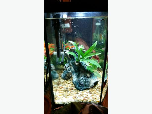 Beautiful Fish Tank Shawnigan Lake Cowichan MOBILE