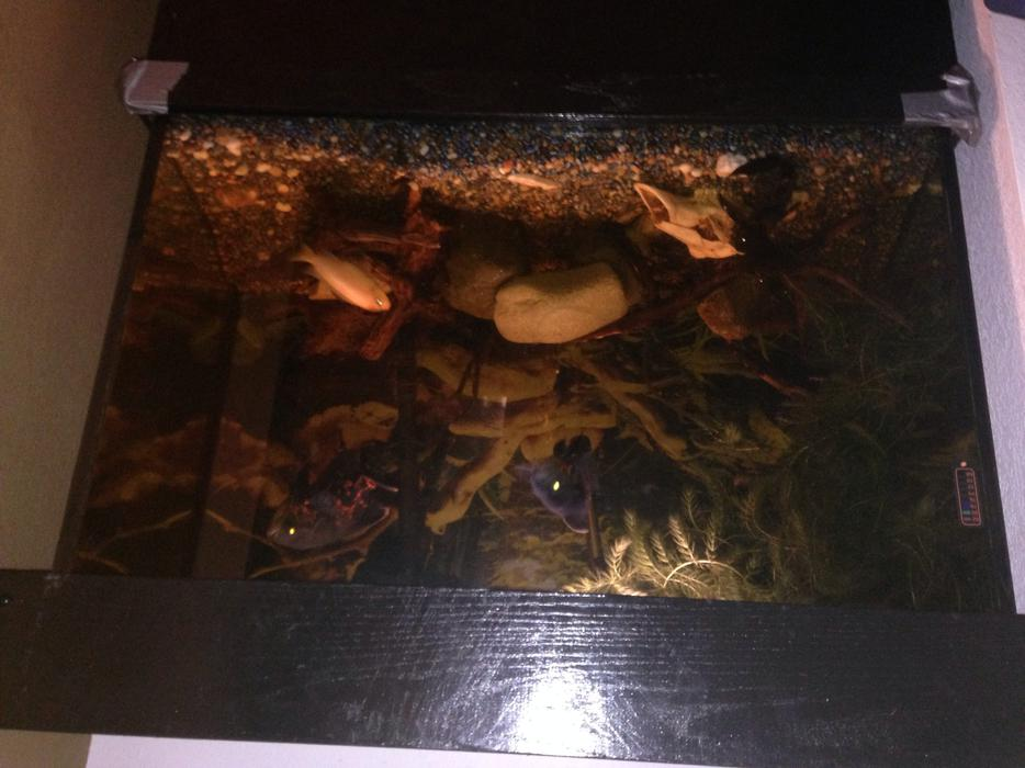 70 gallon fish tank on stand everything included includes for 70 gallon fish tank