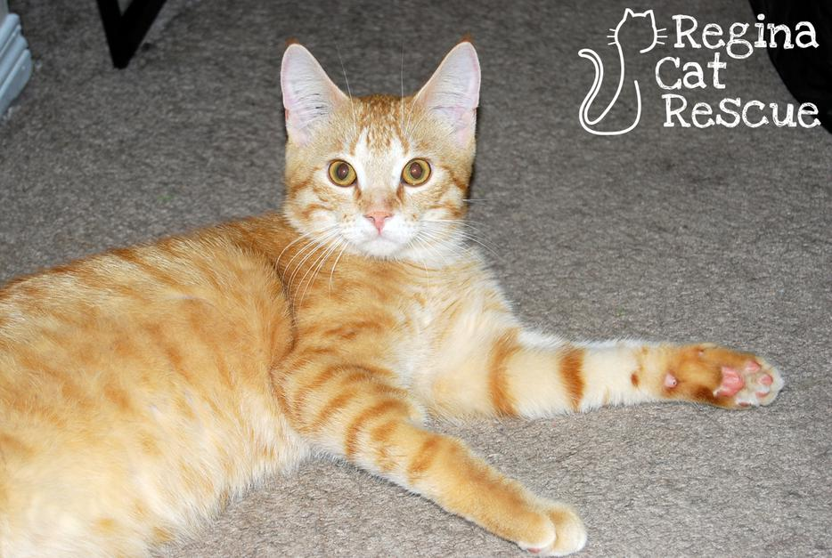 Thunder Bay Cat Rescue