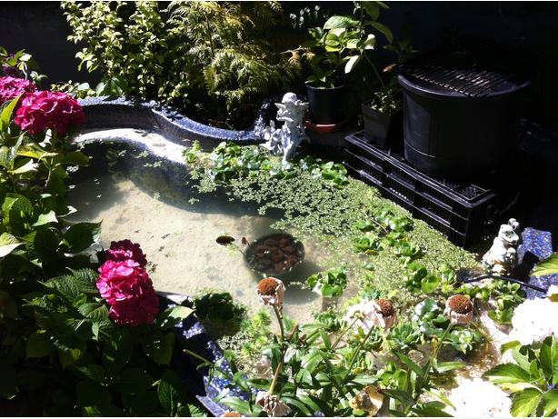 200 gallon rigid koi pond pump filter saanich victoria for 100 gallon pond pump filter