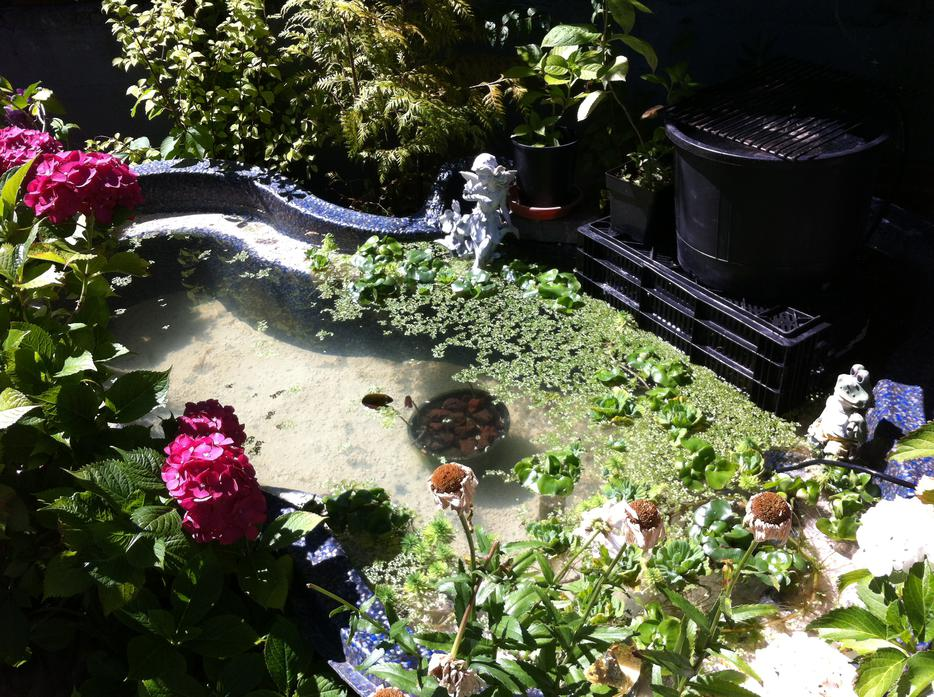 200 gallon rigid koi pond pump filter saanich victoria for Koi pool opening times