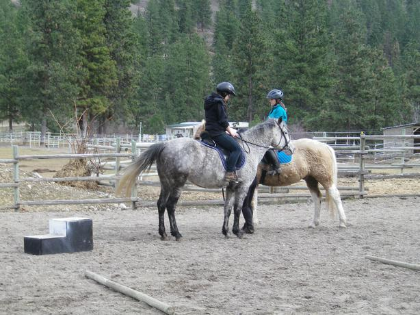 Riding and horsemanship lessons - all levels