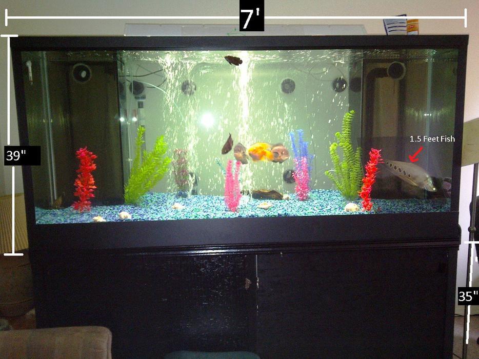 Fish tank 500 gallons 150 sump all north nanaimo nanaimo for 150 gallon fish tank for sale craigslist