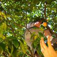 Fruit Harvesting Picking Free Trade