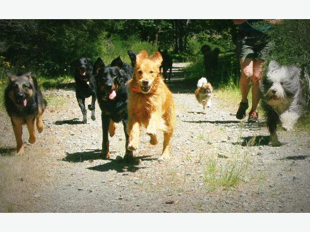 how to be a good pack leader for your dog