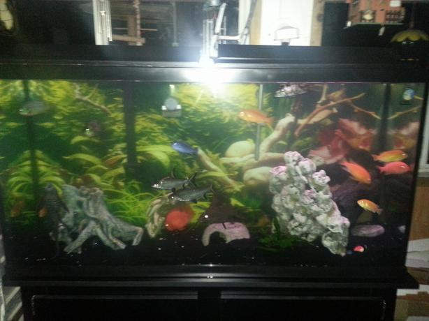 60 gallon fish tank with fish and accessories shoot me an for 60 gallon fish tank