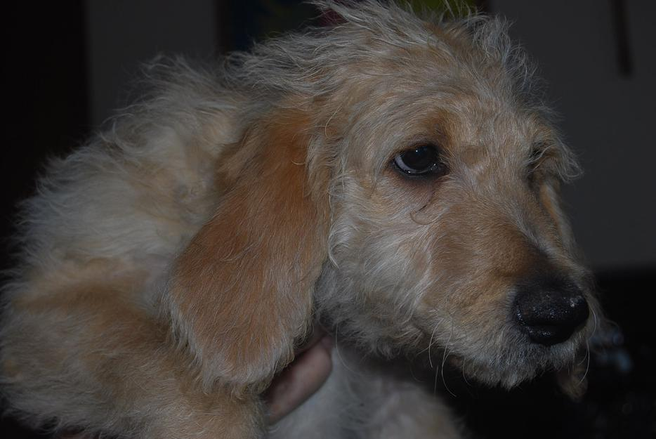 Free Dogs Comox Valley