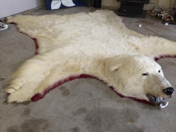 Polar Bear Rugs With Head Roselawnlutheran