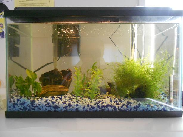 10 gallon starter fish tank with lots of supplies saanich for Starter fish tank