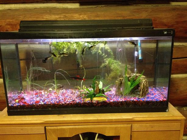 35 gallon aquarium with fish and supplies west shore