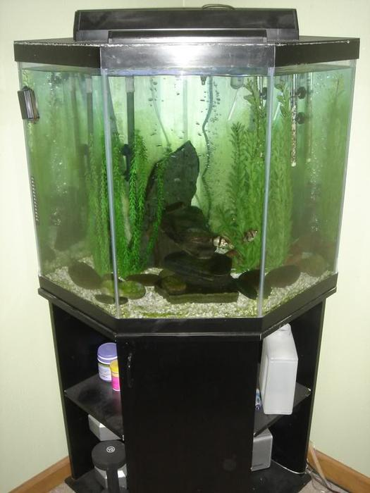55 gallon corner unit fish tank all accessories west for 55 gallon corner fish tank