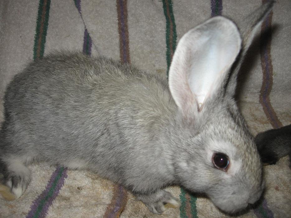 White Rabbit Kitchener