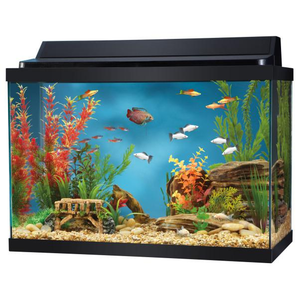 New 20 gallon aquarium w lighted hood extras saanich for 20 gallon fish tank hood