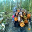FIREWOOD For Sale, Dump Truck Loads, Maple Valley 98038 King County Washington