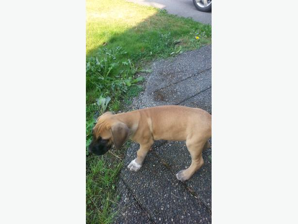 Dogs For Sale In Durham Region