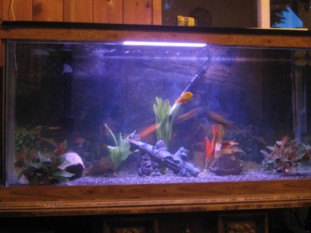 Iso free large fish tanks and accessories port alberni for How to reseal a fish tank