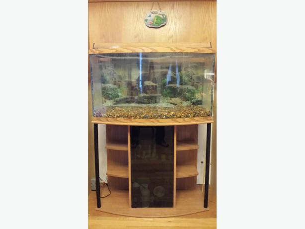 50 gallon bow front aquarium rural regina regina for 50 gallon fish tank