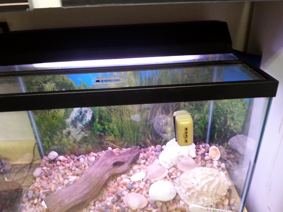 Unused fish tank measures 24 inched long 12inches wide and for Used fish tanks for sale many sizes