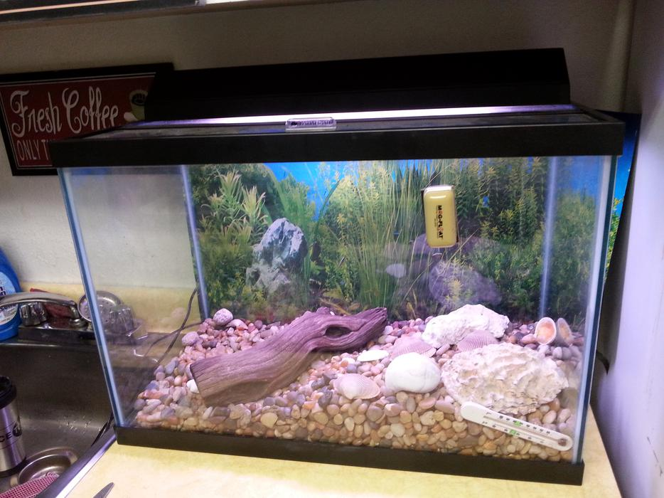 Unused fish tank measures 24 inched long 12inches wide and for Wide fish tank