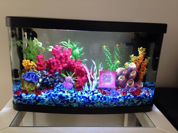 National geographic fish tank saanich victoria for National geographic fish tank filter
