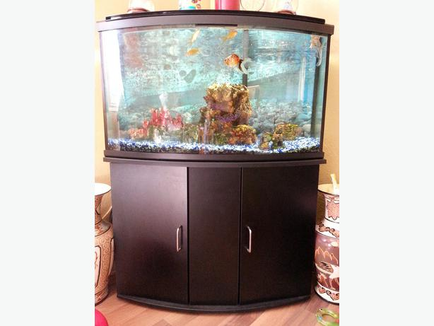 45 gallon fish tank all inculsive west regina regina