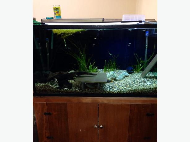 125 Gallon Aquarium : Log In needed $750 ? 125 Gallon Aquarium - Fish Tank and Custom Stand ...