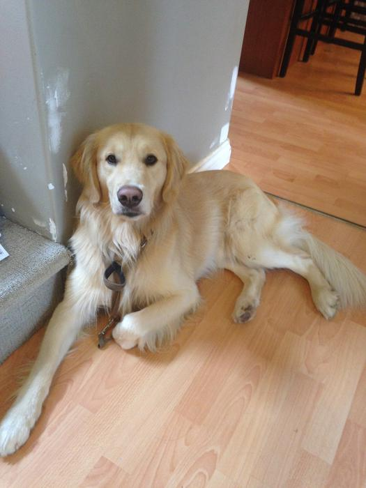 Classified Ads Vancouver Dog For Sale
