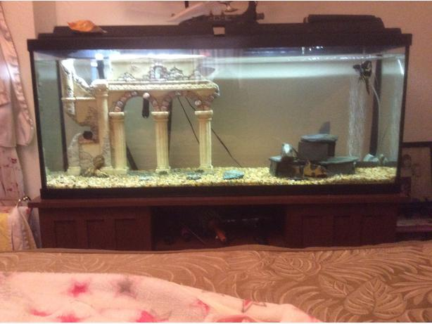 55 gal tank west shore langford colwood metchosin for 55 gallon fish tank stand for sale