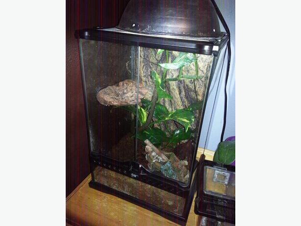 how to set up a tree frog tank