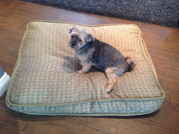 large costco dog bed sold north regina regina With costco large dog bed